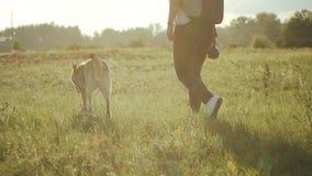 Promenade femelle avec son chien mixbreed dans l'heure d'été de champ Crabot heureux Mouvement lent banque de vidéos
