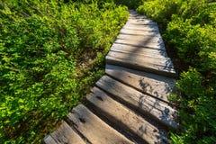 Promenade in het bos Stock Foto's