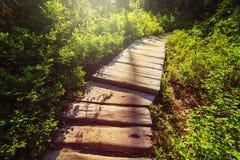 Promenade in het bos Stock Afbeelding
