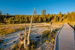 Promenade in het Nationale Park van Yellowstone Stock Fotografie