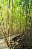 Promenade houten weg in mangrovebos Royalty-vrije Stock Foto's