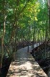 Promenade houten weg in mangrovebos Stock Afbeelding
