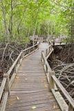 Promenade im Mangrovewald Stockbilder