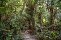Promenade im Regenwald, Maits-Rest Stockbild