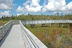 Promenade im Sumpfpark Stockfotografie
