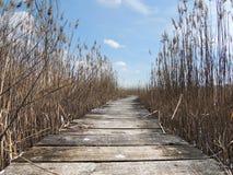 Promenade im swampland mit Schilfen Stockbilder