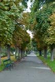 Promenade isolée d'automne en parc Photo stock