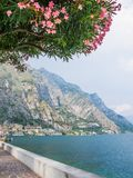 The promenade of Lake Garda in Limone sul Garda with the flowers of a Nerium oleander tree in the foreground. View from the promenade of Lake Garda, the largest Stock Photo