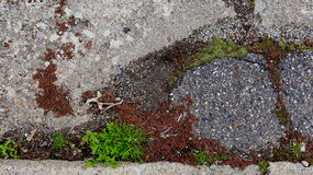 Promenade latérale envahie Photographie stock