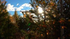 Promenade le long du chemin forestier d'automne clips vidéos