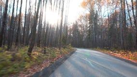 Promenade le long du chemin forestier d'automne banque de vidéos