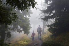 Promenade magique de forêt Image stock