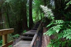 Promenade mit Treppe, Lynn-valey stockfotografie
