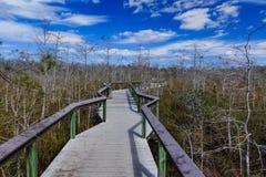 Promenade naine de Cypress, marais photographie stock libre de droits