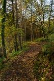 Promenade ombragée de régfion boisée Image libre de droits
