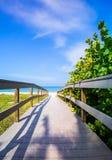 Promenade onder overzeese haver aan strand in Florida Stock Foto's