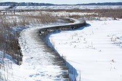 Promenade over moeras Royalty-vrije Stock Afbeelding