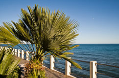 Promenade with palm Stock Photos
