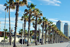Promenade with palm trees in Barcelona Stock Photo