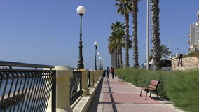 Promenade with palm trees in Malta stock video footage