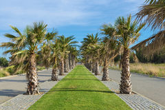 Promenade with palm trees Royalty Free Stock Photo