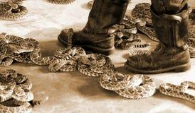 Promenade par des serpents à sonnettes Photographie stock libre de droits