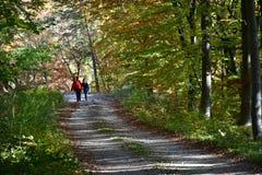 Promenade par les bois Images stock