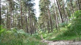 Promenade par les bois Photographie stock libre de droits