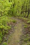 Promenade par les bois photo libre de droits