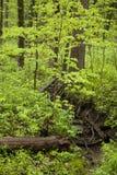 Promenade par les bois image libre de droits