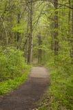 Promenade par les bois photos libres de droits