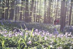 Promenade parmi les fleurs sauvages Photos stock