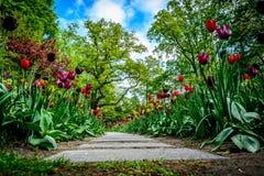 Promenade parmi les tulipes photos libres de droits