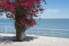 Promenade on Parque das Nações, Lisbon Portugal Stock Photo