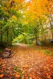 Promenade of the Petite Ceinture in autumn, Paris. France Royalty Free Stock Image