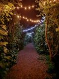 Promenade romantique de nuit Photographie stock libre de droits