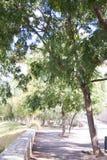 promenade sous les arbres photographie stock