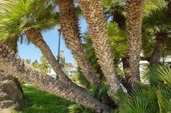 Promenade Spanien d'été de palmiers images libres de droits