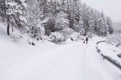 Promenade sur la route neigeuse Images stock