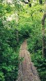 Promenade sur les bois Photographie stock libre de droits