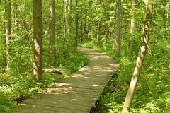 Promenade sur un chemin dans la forêt images stock