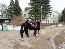 Promenade sur un cheval Photos stock