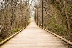 Promenade tussen Leafless de Winterboom Royalty-vrije Stock Foto's