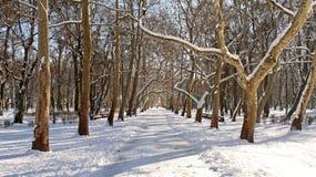 Promenade under the sycamore trees Stock Photos