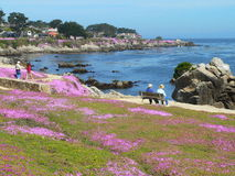 Promenade on waterfront. Beautiful Ice Plant flower (Carpobrotus edulis) field with the majestic Pacific Ocean in background. California. A favorite spot for Stock Photography