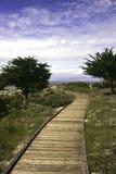Promenade zwischen Monterey-Zypressebäumen Stockfotografie