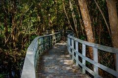 Promenaden in den Sumpfgebieten Stockfotografie