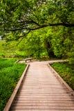 Promenadenspur durch den Wald am Urwald-Park stockfotografie