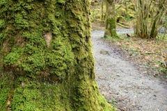 Promenades aventureuses Photographie stock libre de droits