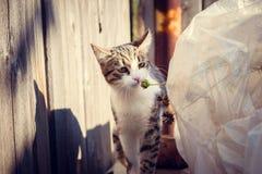 Promenades de chat repérées noires et blanches par lui-même Images stock